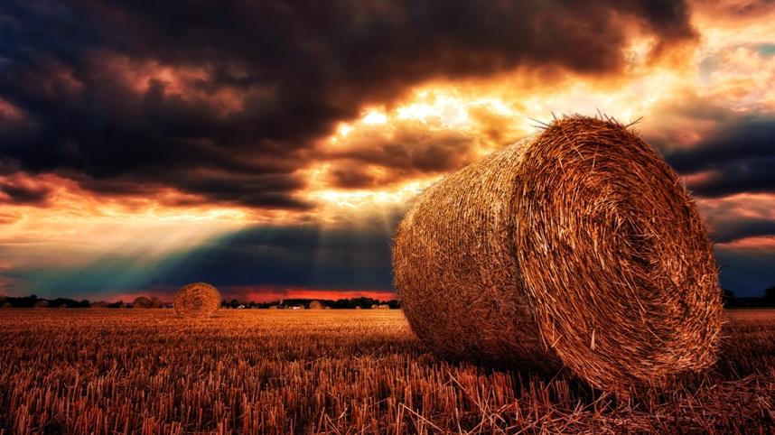 The Festival of Harvest